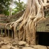 Trees_engulf_the_walls_at_Ta_Prohm_temple1